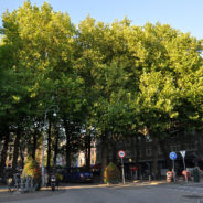 3 november 2016 Het leven van een stadsboom