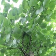 Wil je die boom graag terug?