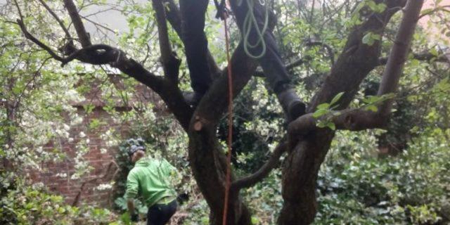 In Memoriam voor een perenboom