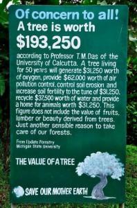 Wat kost een boom?